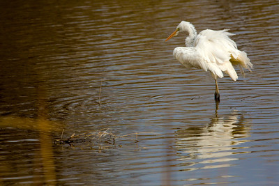 GreatEgret C9945