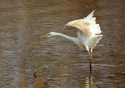 GreatEgret C9933