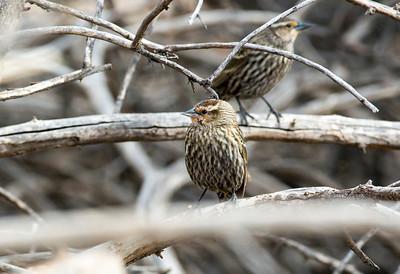 birds C0033