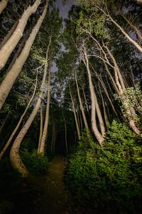 Walking down a tree laden path at Brighton