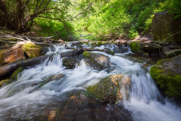 Milcreek Running Down the Canyon in Summer
