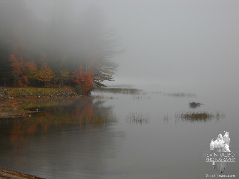 The early Jude catches the fog on the lake... JT