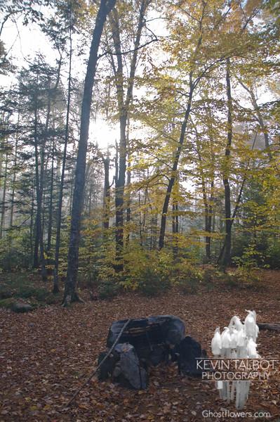 Foggy campsite.