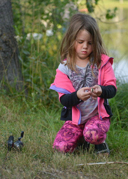 Justin Sheely | The Sheridan Press<br /> Five-year-old Raegan Rosselott untangles her fishing line during the annual Fishing Derby at Rotary Pond in Ranchester Saturday, Aug. 4, 2018. The Tongue River Valley Community Center hosted the fishing derby for children under 13 and under. Children competed for most fish caught and biggest catch to win prizes.