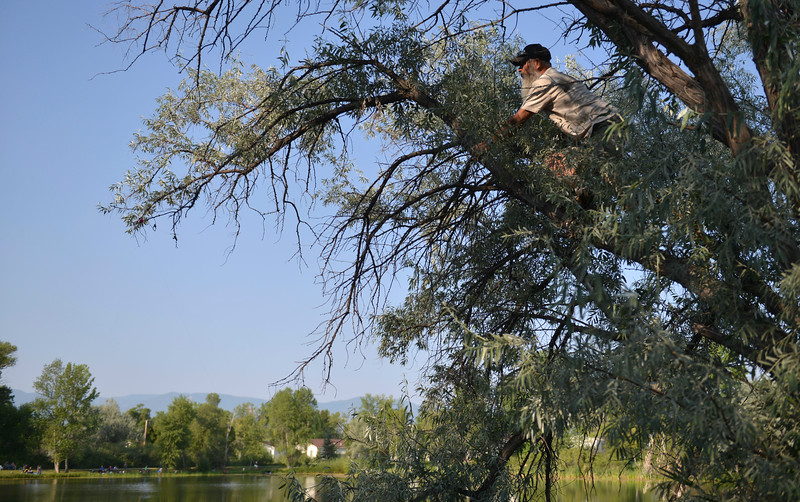 Justin Sheely | The Sheridan Press<br /> John Miles climbs a tree to free his grandchild's fishing lure during the annual Fishing Derby at Rotary Pond in Ranchester Saturday, Aug. 4, 2018. The Tongue River Valley Community Center hosted the fishing derby for children under 13 and under. Children competed for most fish caught and biggest catch to win prizes.