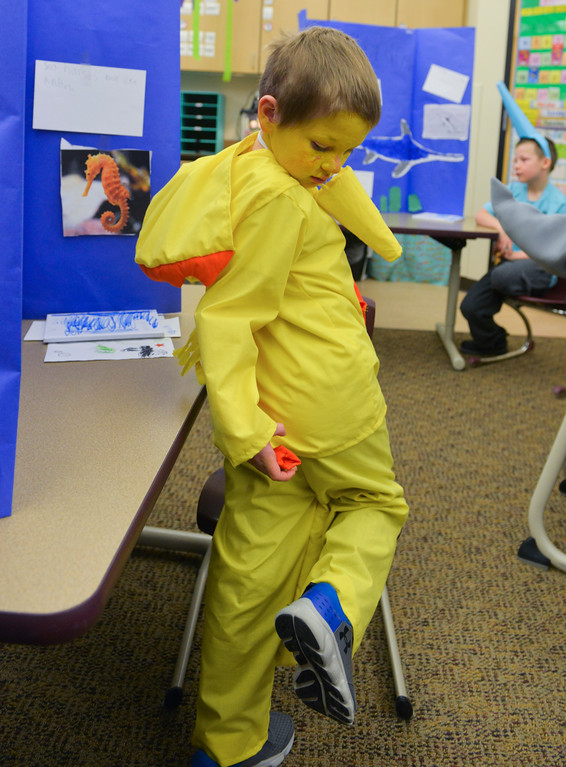 Justin Sheely | The Sheridan Press<br /> <br /> First grader Devin Johnson, as a sea horse, plays with his costume during the Animal Wax Museum event at Woodland Park Elementary School Friday, Feb. 9, 2018. First-grade students researched animals and gave a presentation on their findings through display boards, report books and costumes.
