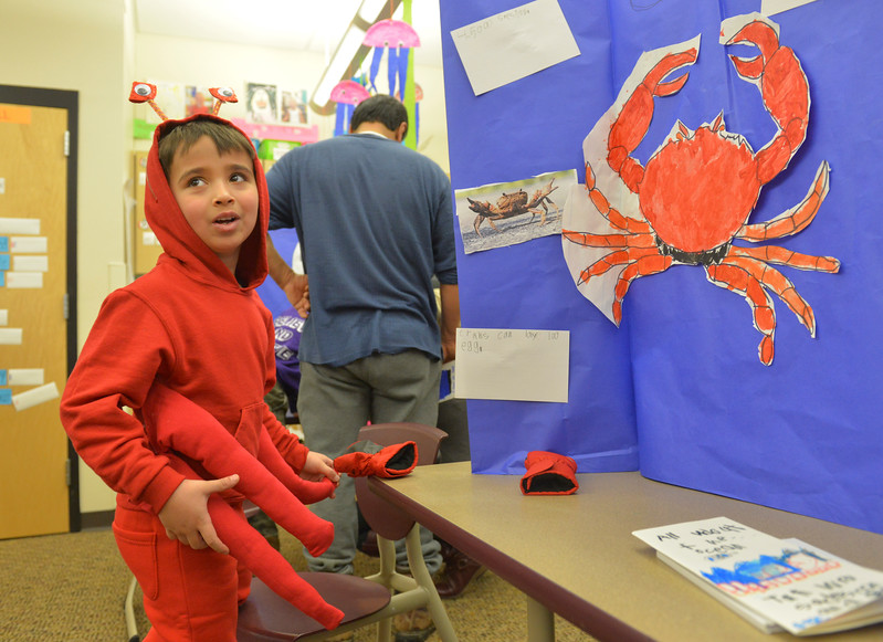 Justin Sheely | The Sheridan Press<br /> <br /> First grader Gage Covolo, as a crab, looks around the classroom during the Animal Wax Museum event at Woodland Park Elementary School Friday, Feb. 9, 2018. First-grade students researched animals and gave a presentation on their findings through display boards, report books and costumes.