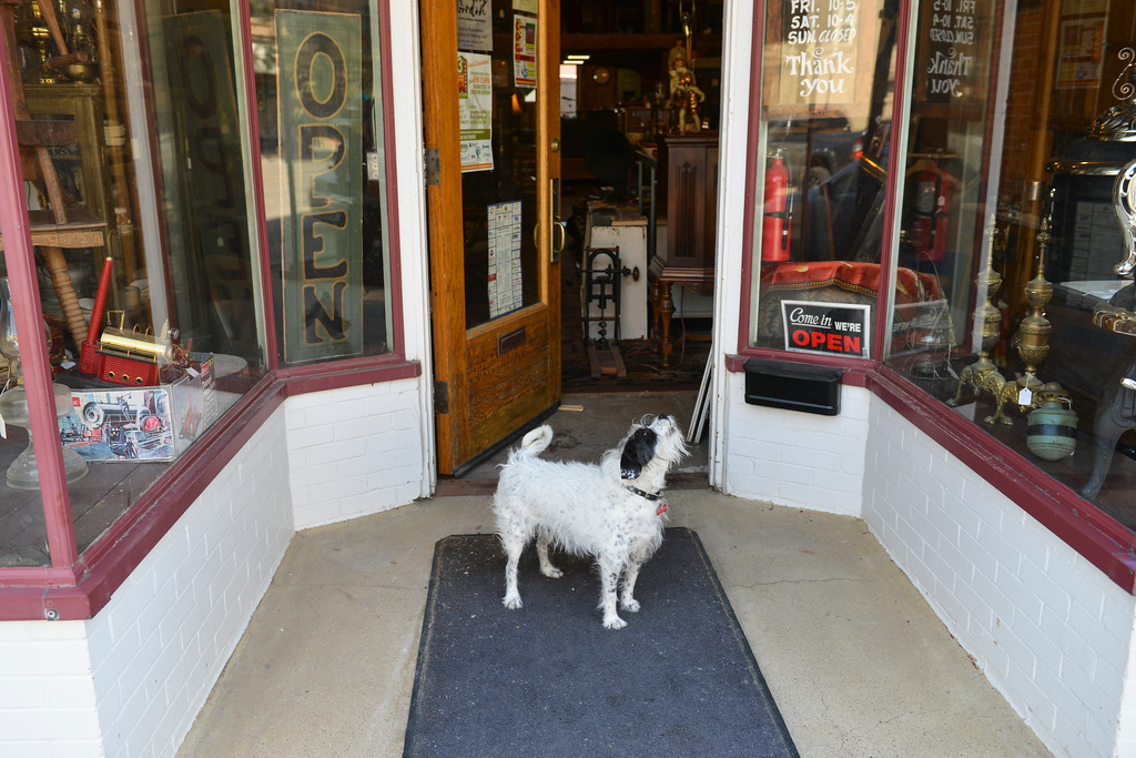 Justin Sheely | The Sheridan Press<br /> A dog barks at pedestrians in front of a Main Street business Wednesday, June 6, 2018.