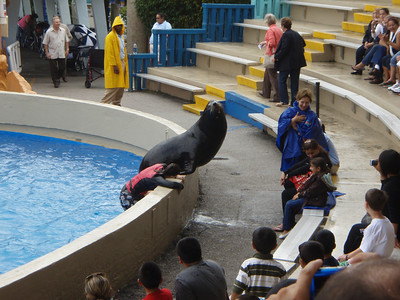 Day 8, Miami Sea Aquarium 11-30-2008