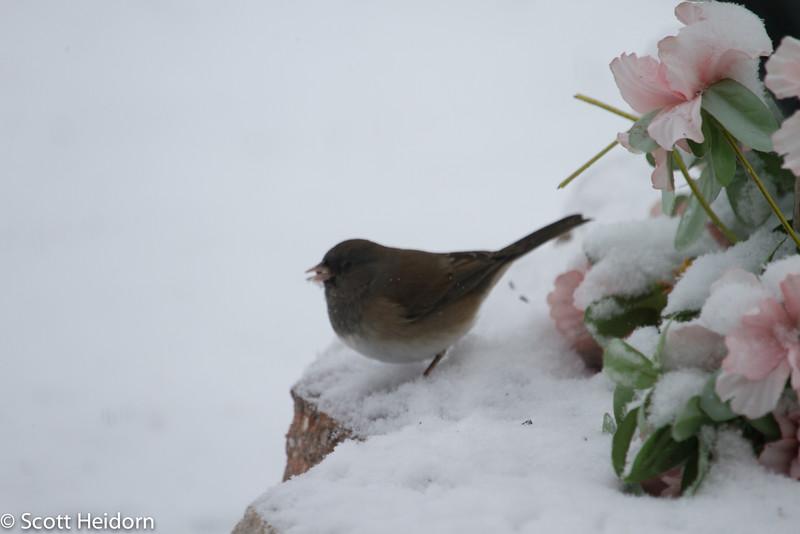 Reno, Winter