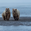 Sisterhood - Silver Salmon Creek, Lake Clark NP, AK