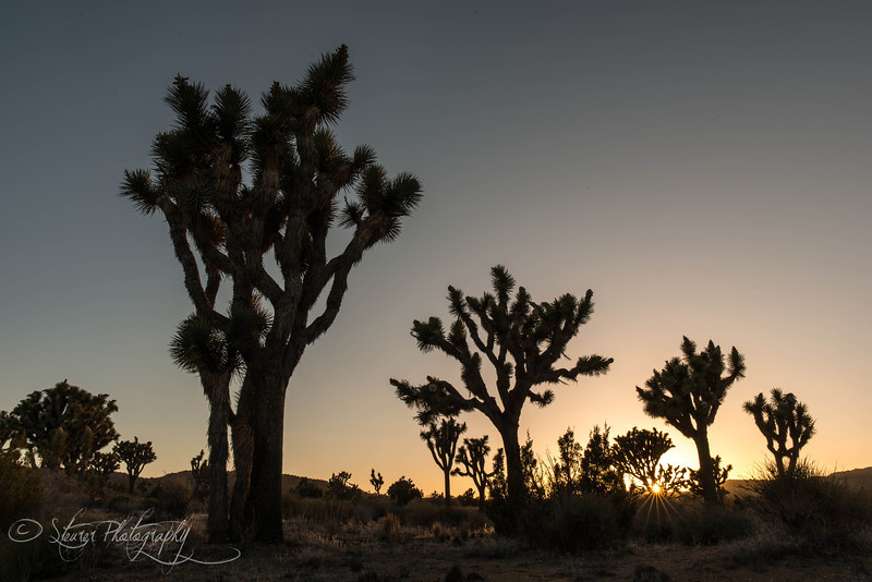 Last light - Joshua Tree NP, CA