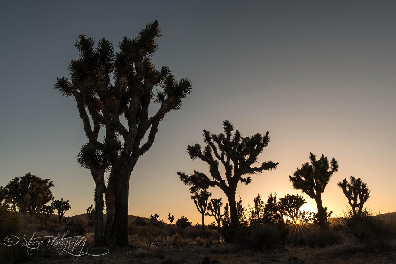 Last light - Joshua Tree NP, CA