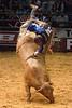 """Bull Rider Goin' Down""<br /> BJCC<br /> Birmingham, Alabama"