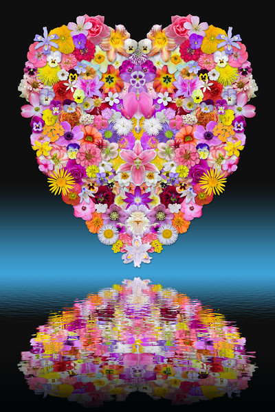 Heart of Flowers (with reflection)