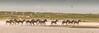 serengeti on the move
