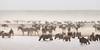 serengeti dustbowl