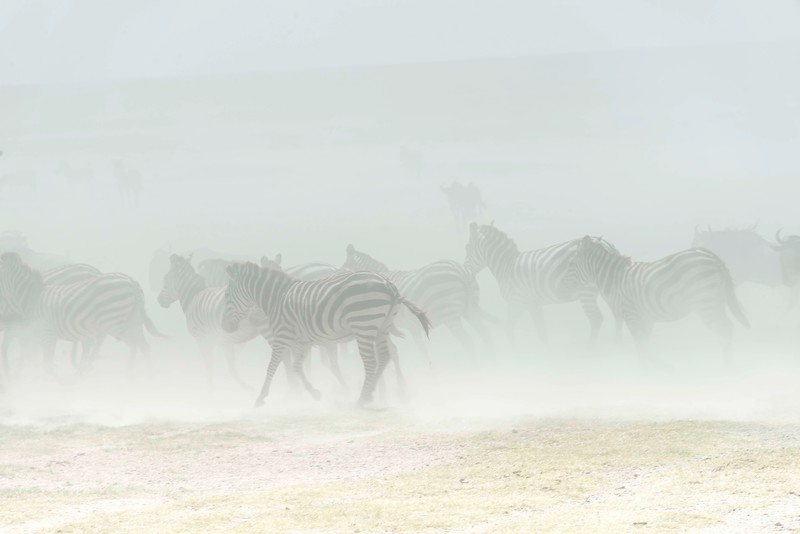 serengeti dust storm