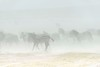serengeti dust storm