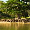 Amazing old tree