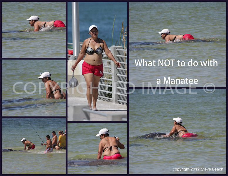 This is the photo that really started it all.<br /> This was posted to the Friends of Fort DeSoto facebook page for a short period of time.<br /> When it was seen by the various groups, I was contacted quickly by the authorities.<br /> At the time, I had been told on the scene that the police were there, Not being one to stick my nose into the middle of an investigate (and I guess I can no longer say that), I stayed long enough to see a few key people leaving.