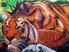 """""""Tiger""""<br /> Wynwood Walls<br /> Miami, Florida"""
