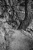 20141017Mist Trail_DSC4635-Edit-Edit