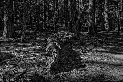 20141018Pohono Trail_DSC4710-Edit-Edit