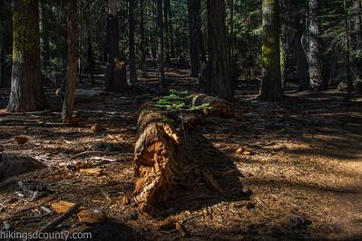 20141018Pohono Trail_DSC4710-Edit
