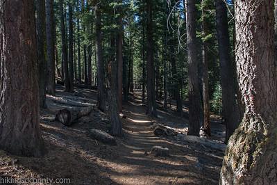 20141018Pohono Trail_DSC4707-Edit