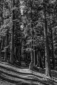 20141018Pohono Trail_DSC4706-Edit-Edit