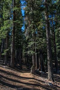 20141018Pohono Trail_DSC4706-Edit