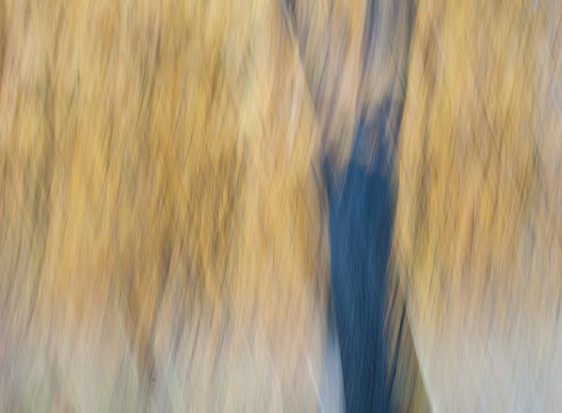 Autumn Cross Hatch