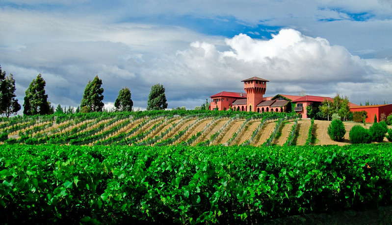 Highfield Winery - Blenheim NZ