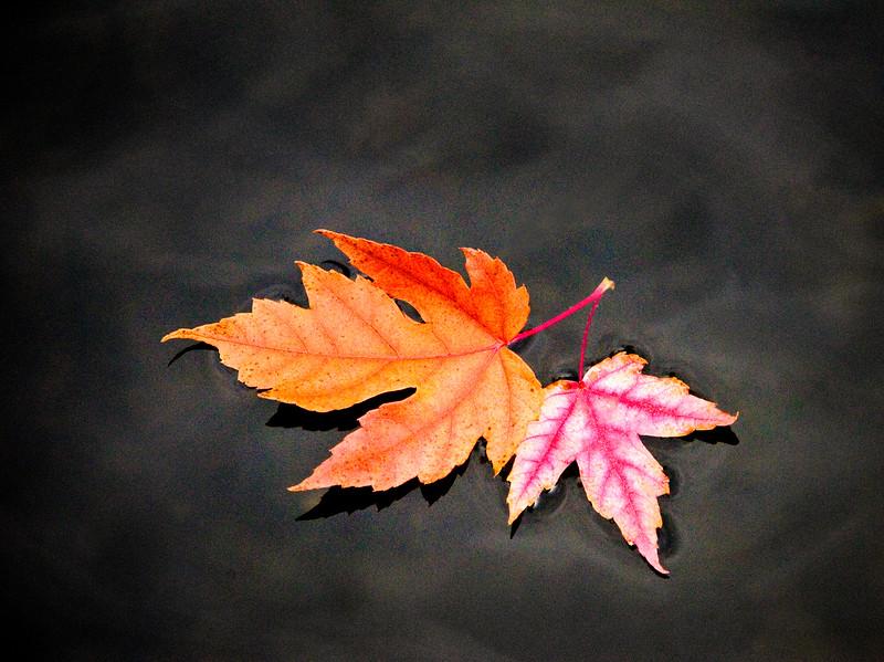 Fall Leaves on Lake Wildwood