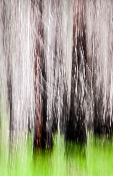 Ghost Trees - Abstract