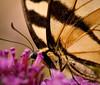 Butterflies-04