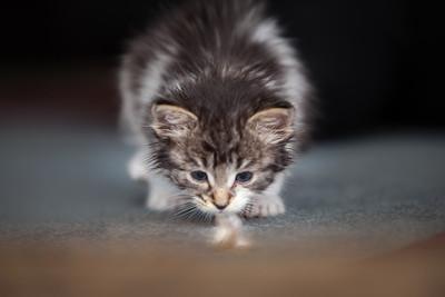 Kathie's Kittens