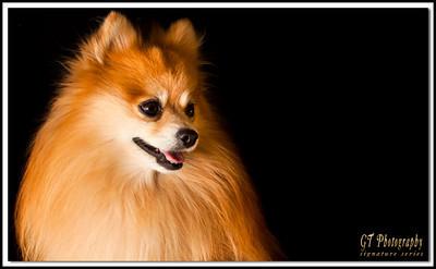 We also provide pet portraits!