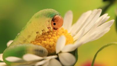 "Small green ""caterpillar""(4) by Bruno SUIGNARD"