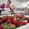 BEN GARVER – THE BERKSHIRE EAGLE<br /> Strawberries have to be perfect before they can be dipped in chocolate.