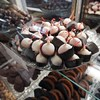 BEN GARVER – THE BERKSHIRE EAGLE<br /> Catherine's Chocolate Shop in Great Barrington offers a large selection of handmade chocolates anf fudge.