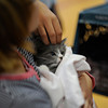 Pet blessing at St. Agnes School in Avon on the feast day of St Francis, patron of animals and ecology.