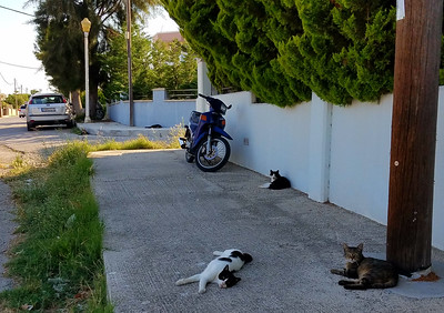 Stray cats lounging on a Rhodes Town street.  There are 6 cats in this photo.