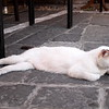 Cat lounging at a restaurant in Rhodes Old Town.