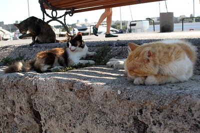 Stray cats by the Madraki harbor in Rhodes Town.