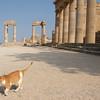Lindos Acropolis cat.