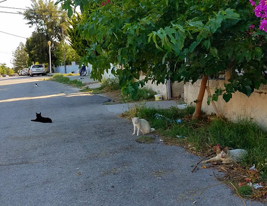 More stray cats in the street.  8 cats in total in this photo.