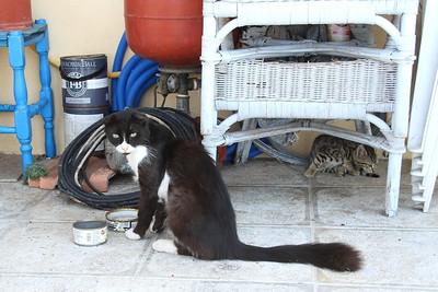 Symi Island cat having its lunch.