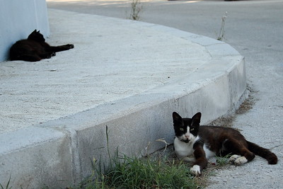 Lounging stray cats in Rhodes Town, Greece.